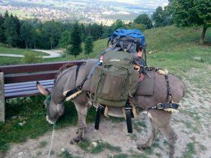 Esel mit Rucksäcken