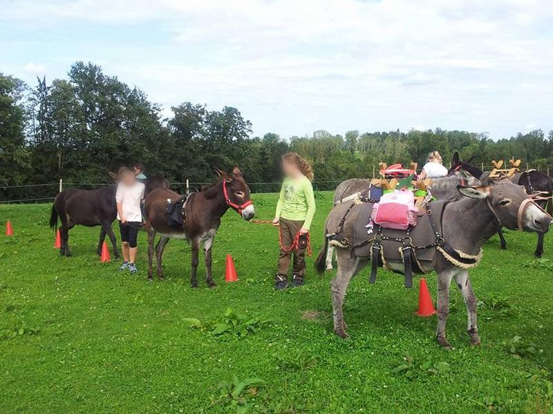 Esel werden von Kindern durch einen Parkour geführt