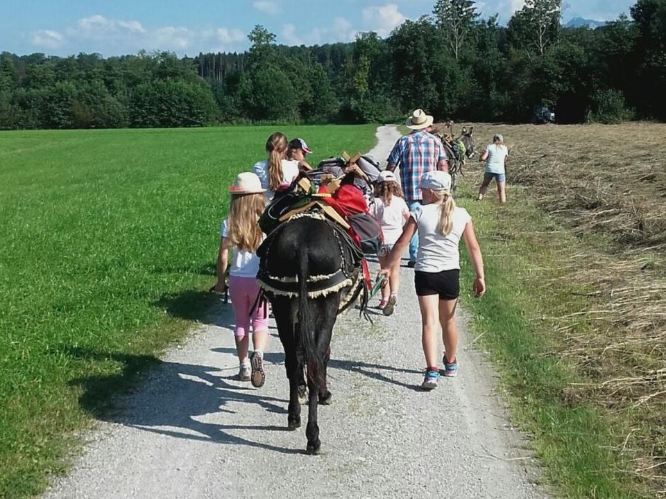 Kinder gehen mit Eseln spazieren