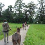 Eselspaziergang mit Erwachsenen