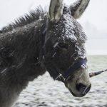 Yanosch im Schnee