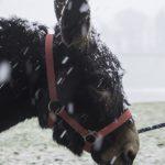 Yinika im Schnee