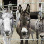 Lilly, Paula, Ferdinand
