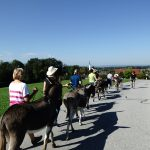 Gruppenwanderung mit 8 Eseln :)