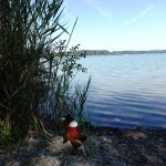 Pause am See