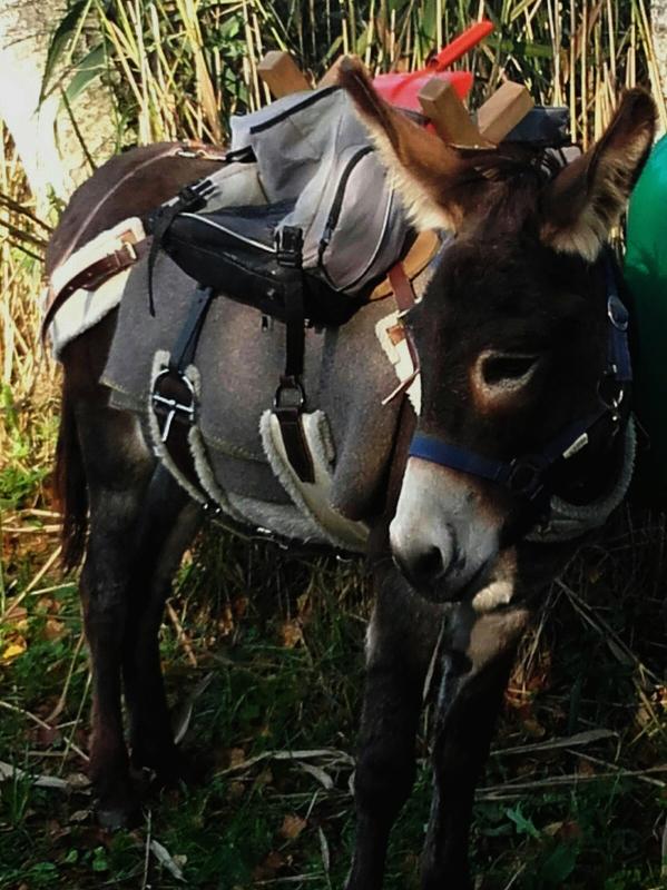 Esel mit Gepäck