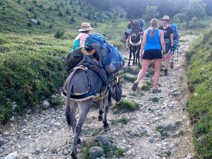 Wandern mit Eseln in den Bergen