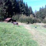 Esel steht auf einer Almwiese
