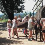 Kindern bürsten die Esel